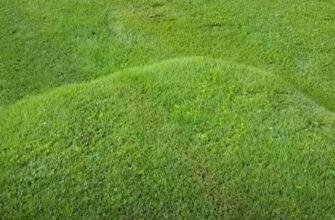 Lawn Bubble