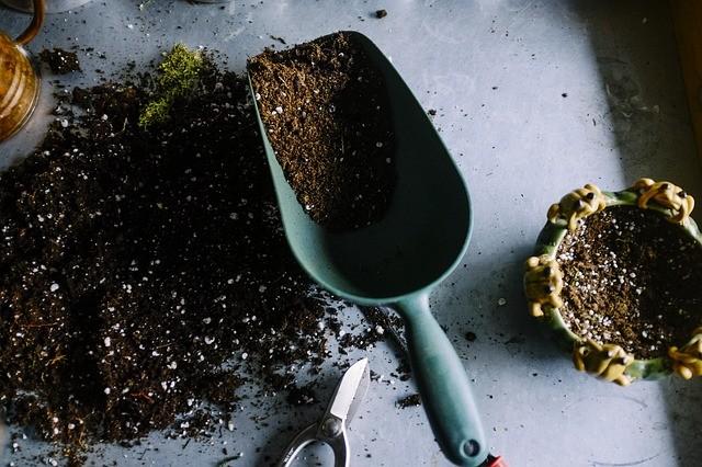 Keep soil moist