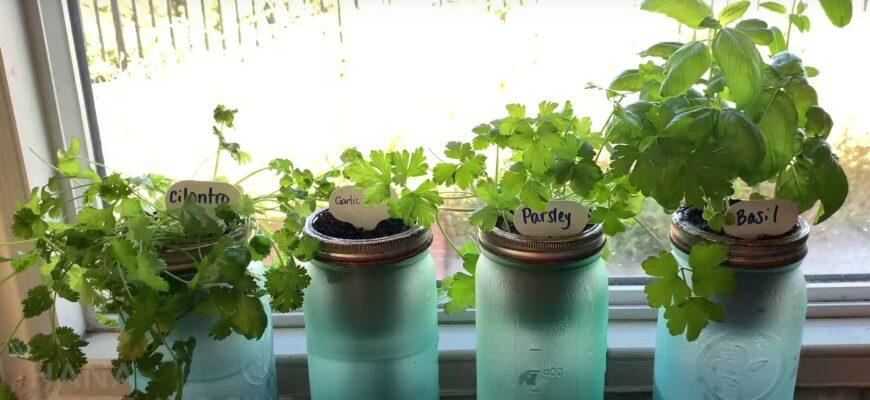 Jar Herb Garden