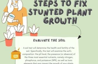 Steps to Fix Stunted Plant Growth